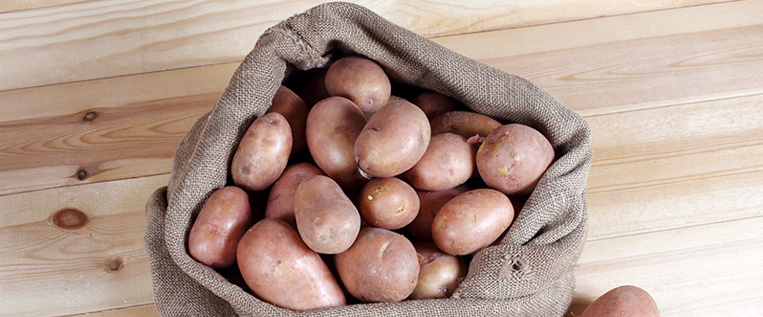 EXPO : PATATE